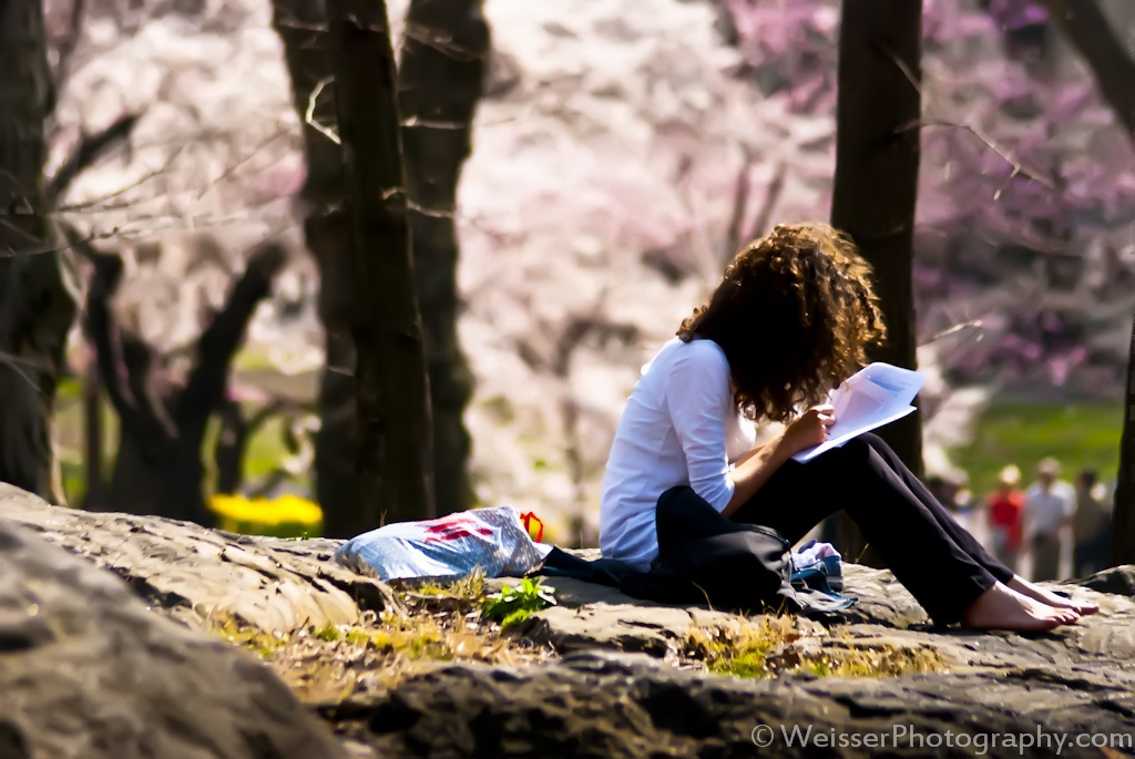 Studying in Central Park, New York City