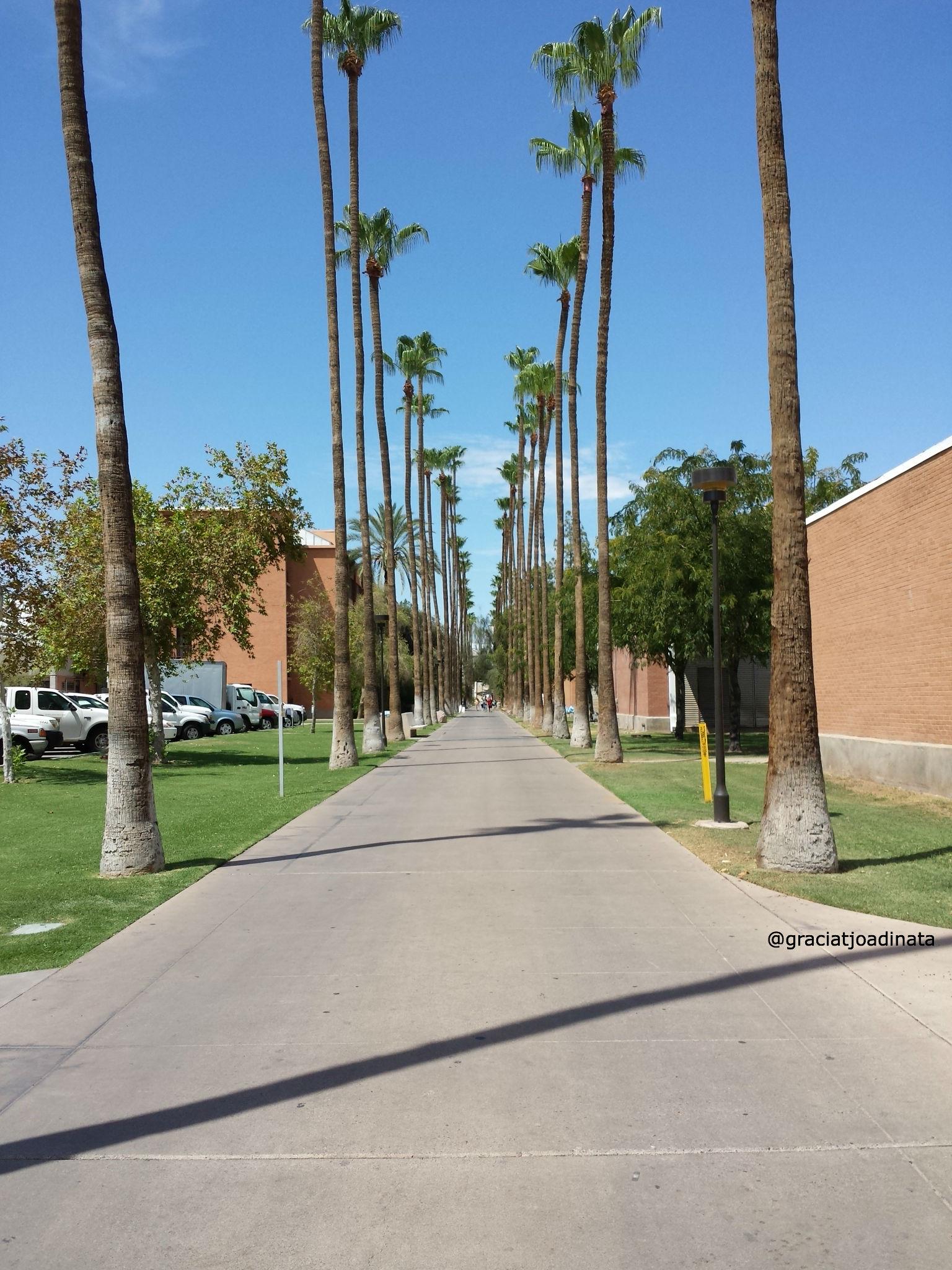 """Palm Walk"""