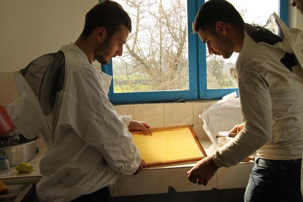 Salah satu kegiatan di jurusan industri lebah.