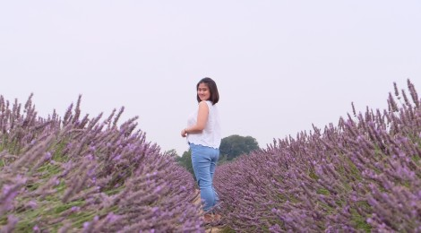 Summer break at Mayfield Lavender Fields (Photo Courtesy of Pradita Putri)