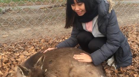 Deer park, Aarhus