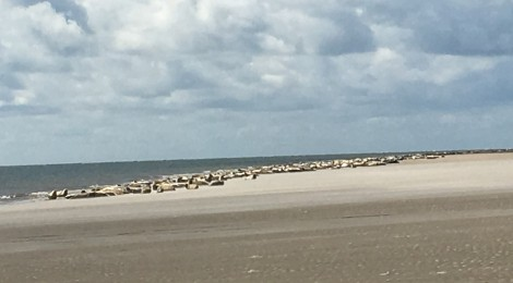 I saw hundreds of seals in Denmark