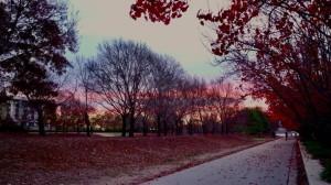 Suasana musim gugur di Canberra - @stephanideby