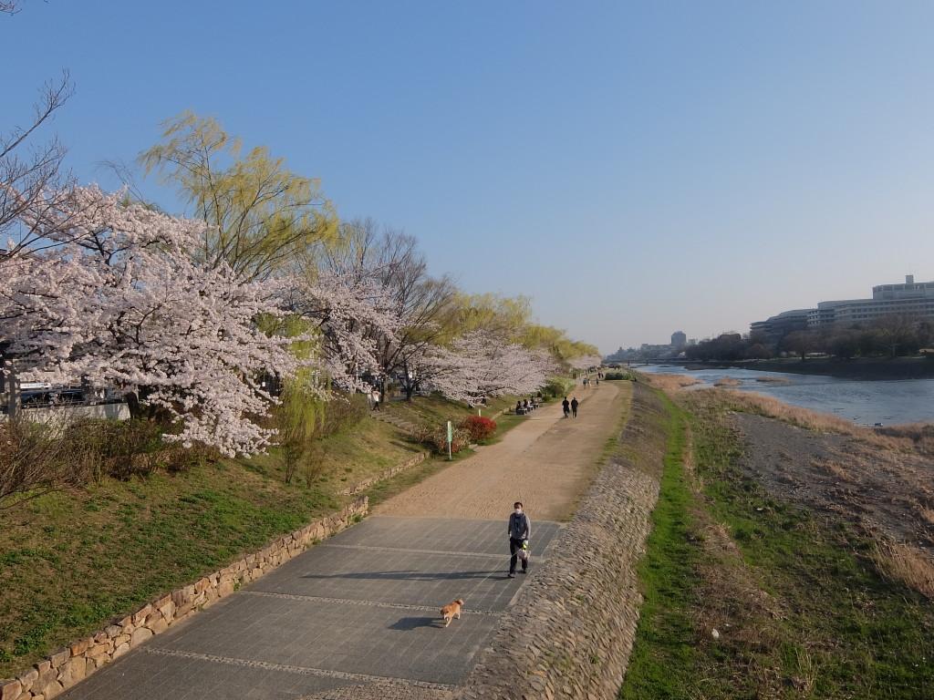 Tepi sungai Kamogawa, Kyoto. (Sumber: Penulis)
