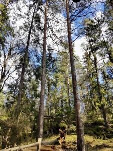 Älvsjöskogens naturreservat - a forest close by that I visited after 3 weeks of isolation